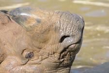 多摩動物公園のインドサイの画像020