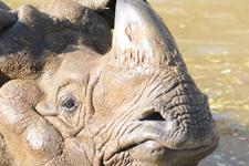 多摩動物公園のインドサイの画像022