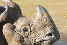 多摩動物公園のインドサイの画像023