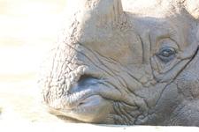 多摩動物公園のインドサイの画像027