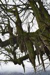 梶ヶ森の木