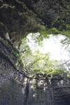 伊尾木洞の画像005