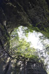 伊尾木洞の画像006