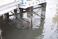 隅田川の橋脚につくフジツボの画像001