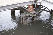 隅田川の橋脚につくフジツボの画像002