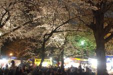 千鳥ヶ淵の満開の夜桜の画像001