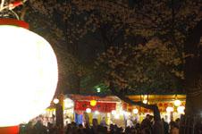 千鳥ヶ淵の満開の夜桜の画像004
