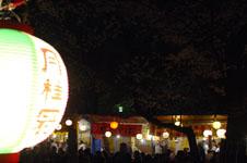 千鳥ヶ淵の満開の夜桜の画像005