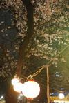 千鳥ヶ淵の満開の夜桜の画像006