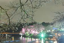 千鳥ヶ淵の満開の夜桜の画像010