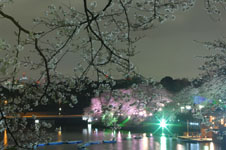 千鳥ヶ淵の満開の夜桜の画像011