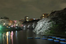 千鳥ヶ淵の満開の夜桜の画像012