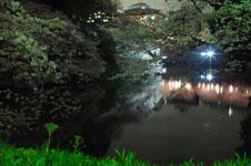 千鳥ヶ淵の満開の夜桜の画像013