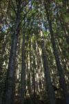 馬路村の林