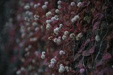 馬路村の花の画像001