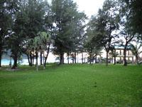 沖縄の芝生の画像002