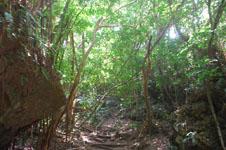斎場御嶽(セーファウタキ)の森の画像001