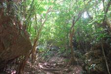 斎場御嶽(セーファウタキ)の森の画像002