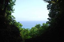 斎場御嶽(セーファウタキ)の森の画像003