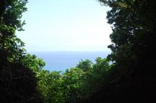 斎場御嶽(セーファウタキ)の森の画像004