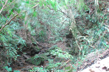斎場御嶽(セーファウタキ)の森の画像005