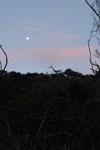沖縄の山の上の月の画像002