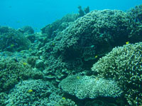 沖縄のサンゴ礁の画像001