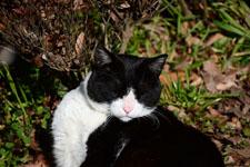猫の画像006