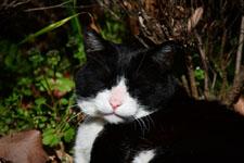猫の画像008