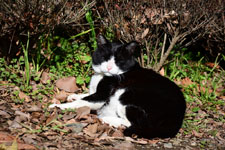 猫の画像009