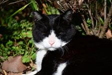 猫の画像010