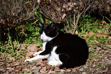 猫の画像011