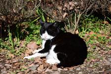 猫の画像012