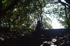 高知県大堂海岸の猿の画像002