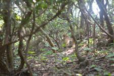 高知県大堂海岸の猿の画像003