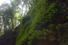 高知県の苔の画像001