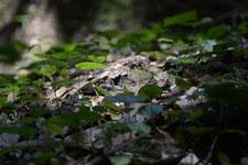 高知県の草の画像001