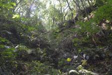 高知県の苔の画像003