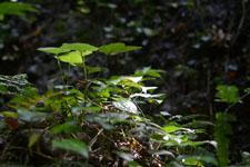 高知県の草の画像002