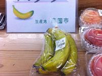 高知県のバナナ