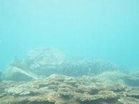 高知県の珊瑚礁の画像002