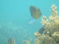高知県の魚の画像001