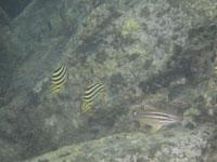 高知県の魚の画像002