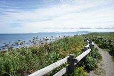 海の草原の画像001