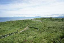 海の草原の画像002