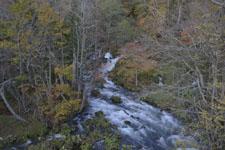 北海道の清流と紅葉の画像001