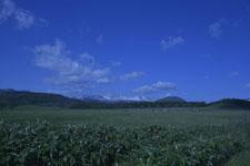 養老牛の牧場の画像001