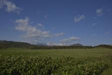 養老牛の牧場の画像002