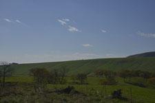 養老牛の牧場の画像003