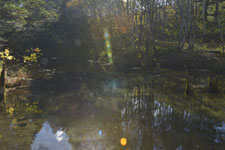 清里町の神の子池の画像001